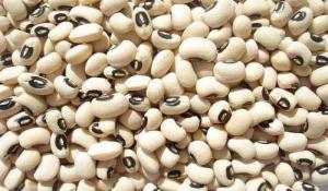 Importante crecimiento en la exportación de frejol castilla