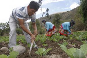 IMPULSAN PROYECTOS DE DESARROLLO EN CENTROS POBLADOS DE LA MAR, AYACUCHO