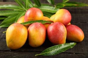 Inacal aprobó norma técnica para promover estándares de calidad en mango fresco