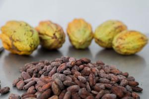 Inacal elabora 14 guías para el fortalecimiento de la calidad del café y cacao
