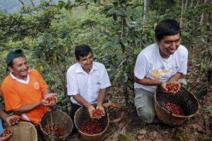 Inacal impulsa fortalecimiento de calidad para mejorar exportación de café