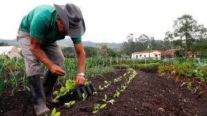 Incorporan Sistema de Garantía Participativo en certificación de productos orgánicos y crean Sello Nacional
