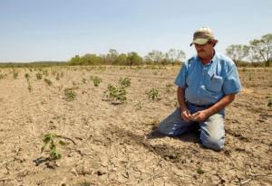 Incorporarán a Tumbes y Piura en el seguro agrario catastrófico