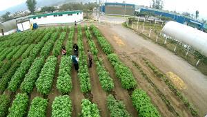 INIA benefició a 500 mil pequeños agricultores con semillas de calidad y proyectos de innovación