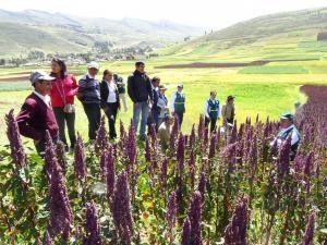 INIA capacitará a 400 pequeños agricultores de Junín