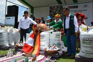 INIA entrega nueva avena forrajera para mejorar economía de 5 mil ganaderos del Cusco