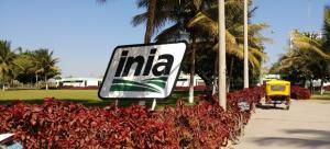 INIA mejora competitividad de 39 mil productores con nuevos cultivos y material de reproducción ganadero de alto valor genético