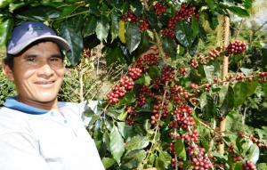 INIA potencia calidad y rendimiento del cultivo de café de más de 50 mil cafetaleros