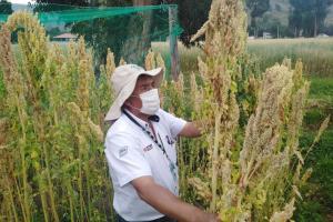INIA potenció la productividad de 286 mil hectáreas de cultivo con semillas certificadas