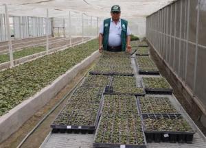 INIA produce cultivos con mejores rendimientos para beneficio de los agricultores en Huaral