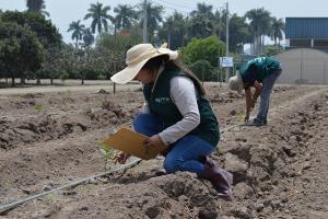 INIA trabaja en identificar semillas de maracuyá de alta calidad genética para exportación