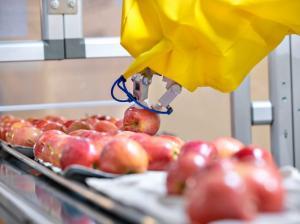 Innovación varietal en manzana será el tema central de Interpoma 2020