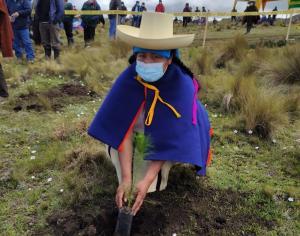 Instalan más de 22 mil plantones forestales maderables en Lucllapuquio en Cajamarca