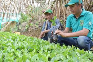 Instalarán más de 600 hectáreas de especies forestales en suelos degradados en Ayacucho