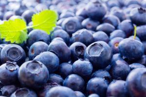 International Blueberry Organization Summit será reprogramada para agosto del 2021