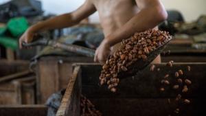 Invertirán casi S/ 5 millones para mejorar cadena productiva del cacao en comunidades de Loreto