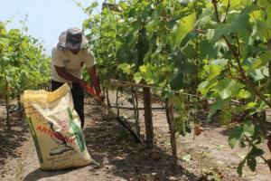 Investigan abonamiento con guano de islas en cultivos de zapallo, cebolla, ajo, café y cacao