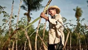 ISO calcula déficit mundial de azúcar en periodo 2020-2021 de 3.5 millones de toneladas