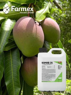 Kamab 26-S: un aliado en la producción de mango con calidad de exportación
