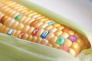 La adopción de semillas transgénicas es ir cediendo el derecho a la soberanía alimentaria que deben tener todos los países