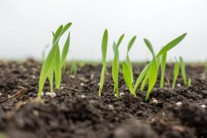 ¿La agricultura puede ayudar a combatir la anemia y la desnutrición?