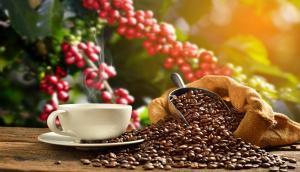 La exportación de café se ha mantenido en una meseta de 240 mil toneladas en los últimos cuatro años