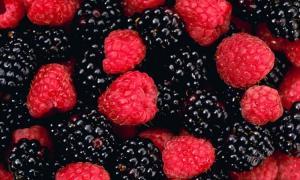 La frambuesa, mora y cereza son los próximos pasos en la ruta de los berries peruanos