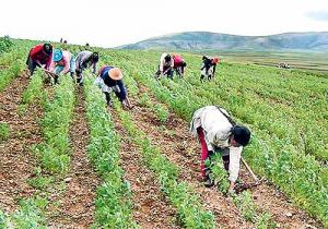La otra agricultura