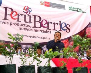 LA RUTA PERUANA DE LOS BERRIES