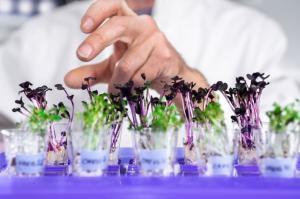 Laboratorio de Genómica y Bioinformática de la UNALM rechaza decisión de extender la moratoria a los transgénicos
