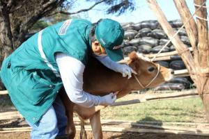 Lambayeque: potencian ganadería familiar con acciones sanitarias de prevención y control