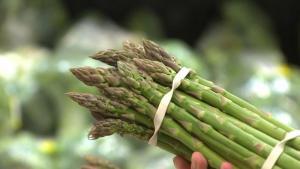 Lambayeque: productores se encuentran formalizados para exportar espárrago a Europa