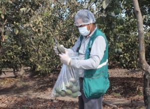 Lambayeque: Senasa realizará monitoreo de residuos químicos en 12 alimentos de origen vegetal