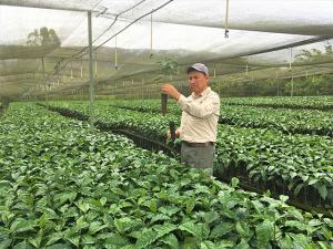 Lanzarán en Perú programa MOCCA que busca promover sistemas de mercado de café y cacao duraderos, inclusivos y prósperos