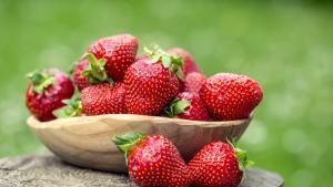 Las fresas, un delicado negocio con potencial en Europa