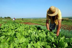 Ley de cooperativas agrarias impulsará productividad y rentabilidad