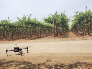 """""""Lo más importante en la aplicación de agricultura de precisión es la interpretación de los datos"""""""