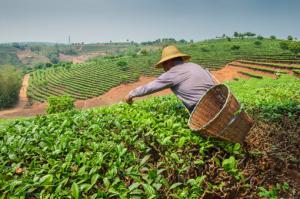 Los efectos del libre comercio sobre la agricultura familiar
