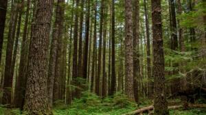 Maderacre del Grupo Wong sumará nuevas especies de concesión forestal