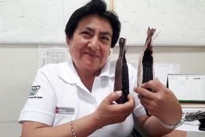 Maíz morado inspiró a investigadora cajamarquina y gana concurso Ingeniera 2020
