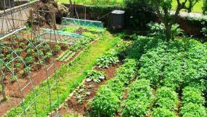 Malnutrición y opciones de intervención desde la agricultura