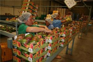Mango peruano brilló en Asia Fruit Logistica 2018