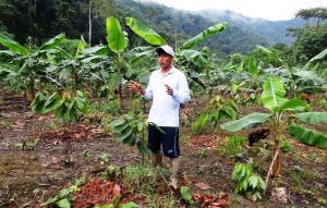 Más de 450 familias se beneficiarán con proyecto para impulsar mejora de los productos frutícolas en San Gabán