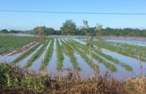 Más de 48 mil hectáreas afectadas y destruidas en el país durante temporada de lluvias