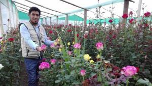 Más del 50% del trabajo que genera la floricultura en nuestro país es ocupada por mujeres