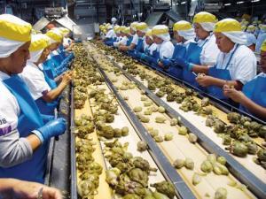 Mayo: exportaciones de alcachofa sumaron 2.792 toneladas