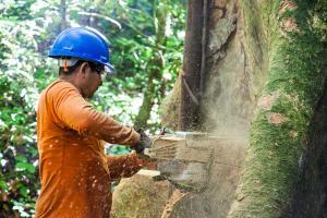 Mejor zonificación, incentivos económicos y seguridad jurídica son claves para el desarrollo de concesiones forestales