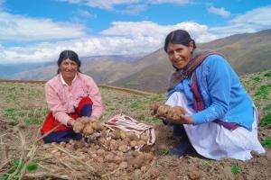 Mejorarán agricultura familiar basada en la papa