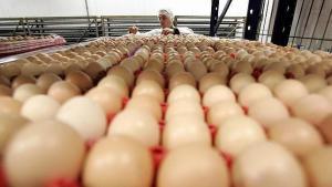 Mercado de producción de huevo en Perú factura alrededor de S/ 1.4 millones