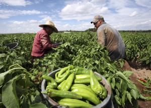 México: advierten de próxima crisis alimentaria a causa de la paralización por el Covid-19